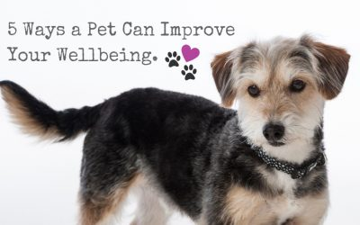 5 Ways A Pet Can Improve Your Wellbeing.