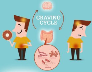 infographic the craving cycle